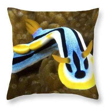 Nudibranch Feeding On Algae, Papua New Throw Pillow by Terry Moore