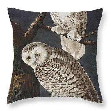 Snowy Owl Throw Pillow by John James Audubon