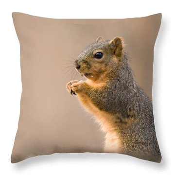 A Fox Squirrel Sciurus Niger Finds Throw Pillow by Joel Sartore