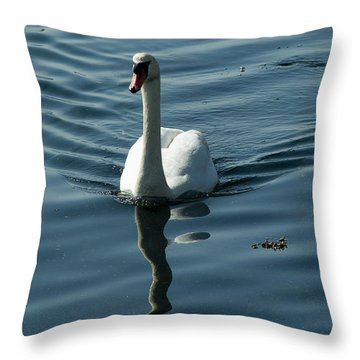 A Lone Swan Swims Through The Water Throw Pillow by Todd Gipstein