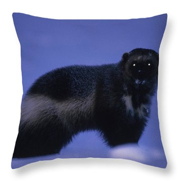 A Portrait Of A Wolverine In The Arctic Throw Pillow by Paul Nicklen