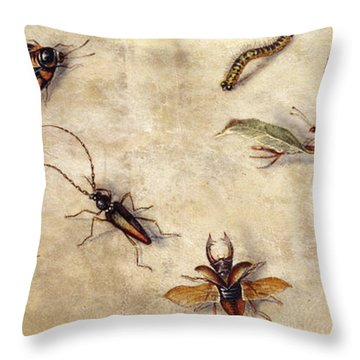 A Study Of Various Insects, Fruit And Animals Throw Pillow by Jan Van Kessel the Elder