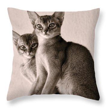 Abyssinian Kittens Throw Pillow by Ari Salmela