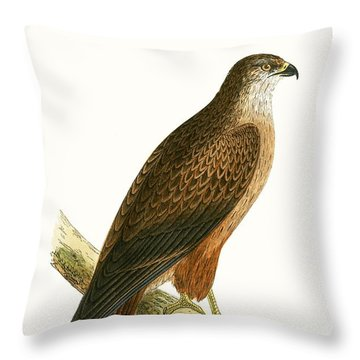 African Buzzard Throw Pillow by English School