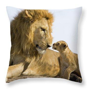 African Lion Panthera Leo Seven Throw Pillow by Suzi Eszterhas