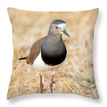 African Wattled Lapwing Vanellus Throw Pillow by Panoramic Images