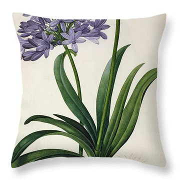 Agapanthus Umbrellatus Throw Pillow by Pierre Redoute