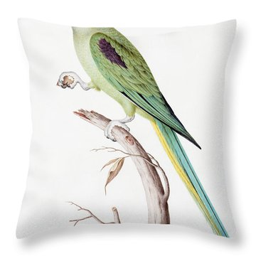 Alexandrine Parakeet Throw Pillow by Nicolas Robert