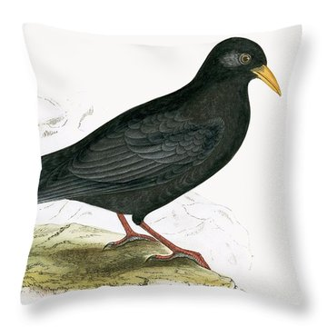 Alpine Chough Throw Pillow by English School