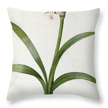 Amaryllis Vittata Throw Pillow by Pierre Redoute