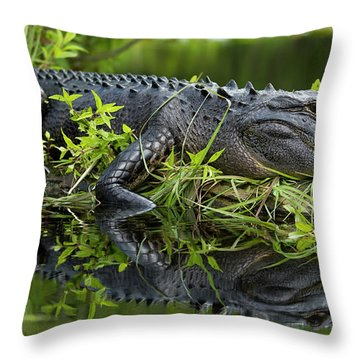 American Alligator In The Wild Throw Pillow by Dustin K Ryan