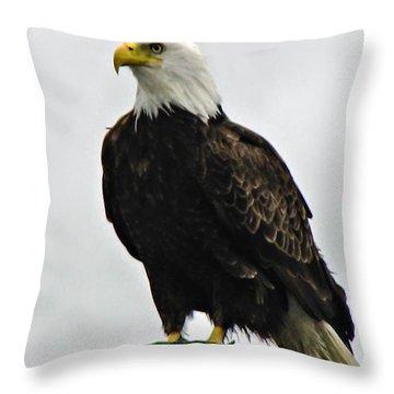 American  Bird Throw Pillow by Robert Bales