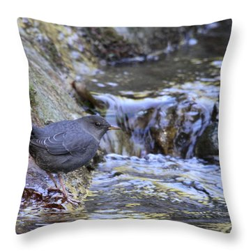 American Dipper Throw Pillow by Angie Vogel