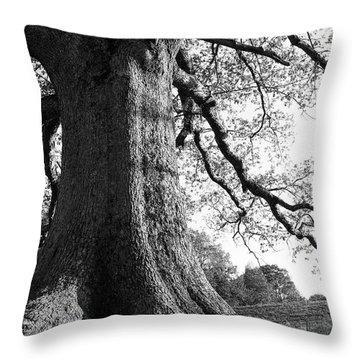 Ancient Oak Throw Pillow by Thomas R Fletcher