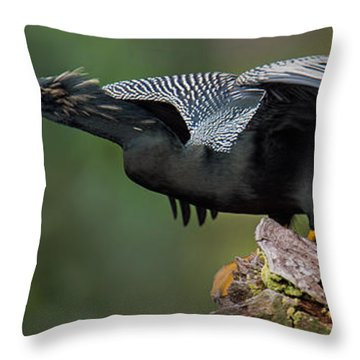 Anhinga Anhinga Anhinga, Costa Rica Throw Pillow by Panoramic Images