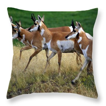 Antelope 1 Throw Pillow by Marty Koch