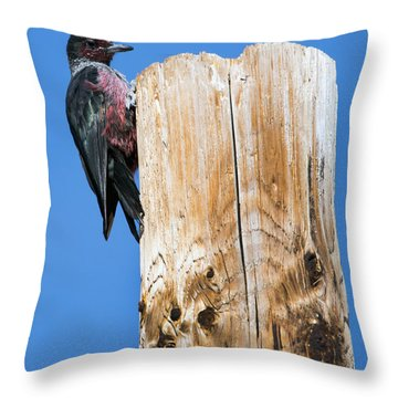 Any Tree Will Do Throw Pillow by Mike Dawson