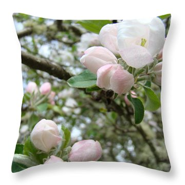 Apple Tree Blossoms Art Prints Apple Blossom Buds Baslee Troutman Throw Pillow by Baslee Troutman