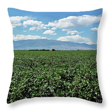 Arizona Cotton Field Throw Pillow by Methune Hively