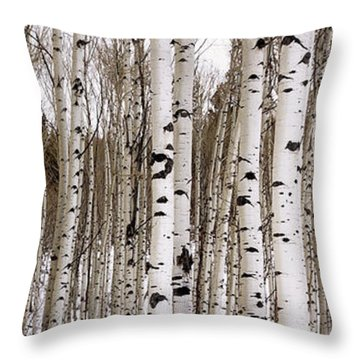 Aspens In Winter Panorama - Colorado Throw Pillow by Brian Harig