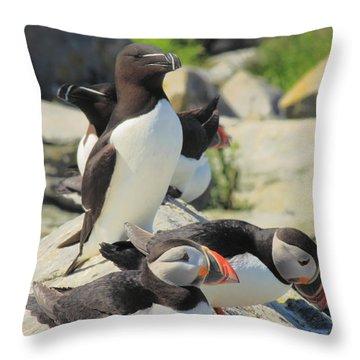 Atlantic Puffins And Razorbill Throw Pillow by John Burk