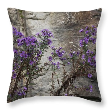 Autumn Asters Throw Pillow by Randy Bodkins