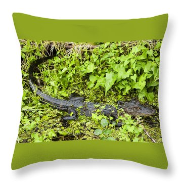Baby Alligator Throw Pillow by Marilyn Hunt