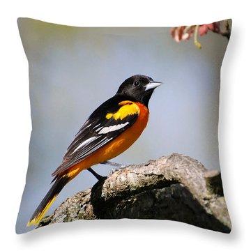 Baltimore Oriole Throw Pillow by Christina Rollo