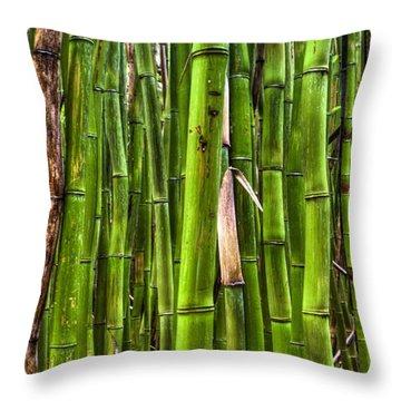 Bamboo Throw Pillow by Dustin K Ryan