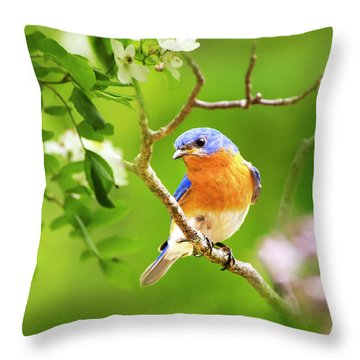 Beautiful Bluebird Throw Pillow by Christina Rollo