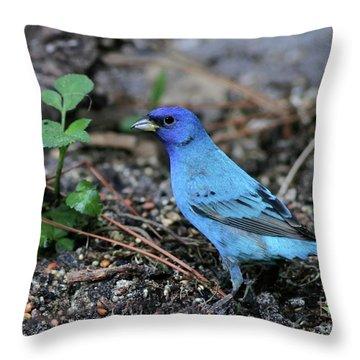 Beautiful Indigo Bunting Throw Pillow by Sabrina L Ryan