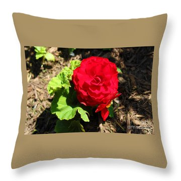 Begonia Flower - Red Throw Pillow by Corey Ford