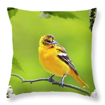 Bird And Blooms - Baltimore Oriole Throw Pillow by Christina Rollo