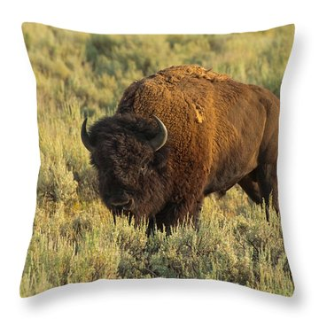 Bison Throw Pillow by Sebastian Musial