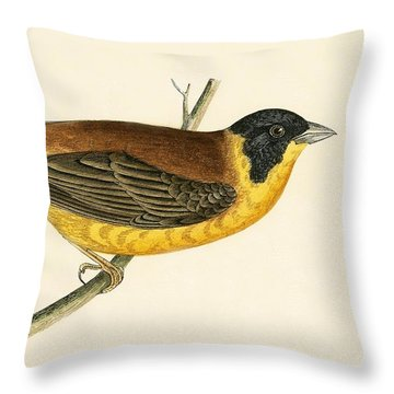 Black Headed Bunting Throw Pillow by English School