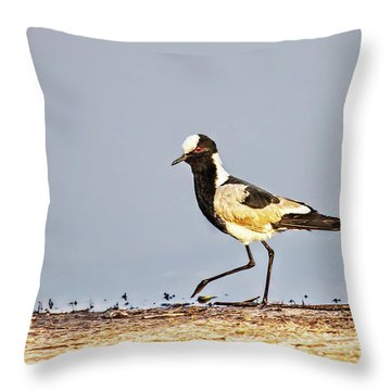 Black-wing Lapwing Throw Pillow by Kay Brewer