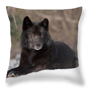 Black Wolf Throw Pillow by John Hyde - Printscapes