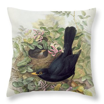 Blackbird,  Throw Pillow by John Gould