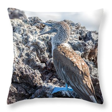 Blue Footed Booby Throw Pillow by Jess Kraft