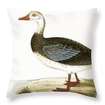 Blue Winged Goose Throw Pillow by English School