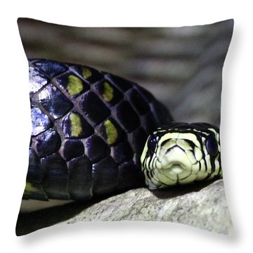 Boa Throw Pillow by Brent Sisson
