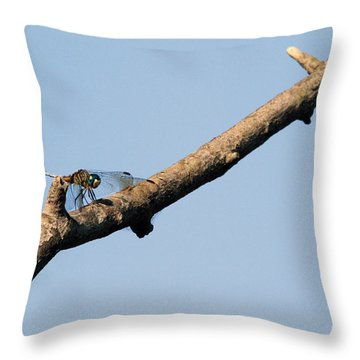 Branching Out Throw Pillow by Karol Livote