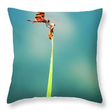 Bug Olympics Xvii Throw Pillow by Charles Dobbs