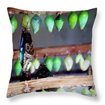 Butterfly With Butterfly Chrysalis 1 Throw Pillow by Andee Design