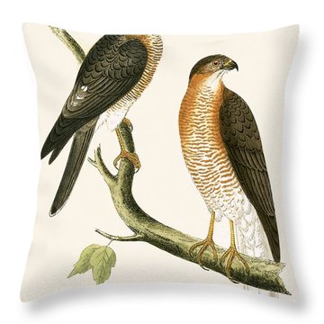 Calcutta Sparrow Hawk Throw Pillow by English School