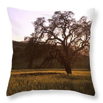 California Hwy 25 Oak Throw Pillow by Kathy Yates