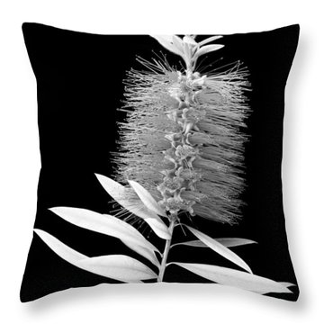 Callistemon Beauty 3 Throw Pillow by Kelley King