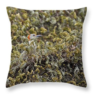 Camouflaged Red-bellied Woodpecker Throw Pillow by Carolyn Marshall