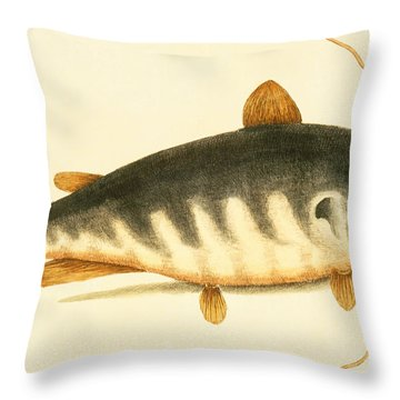 Catfish Throw Pillow by Mark Catesby