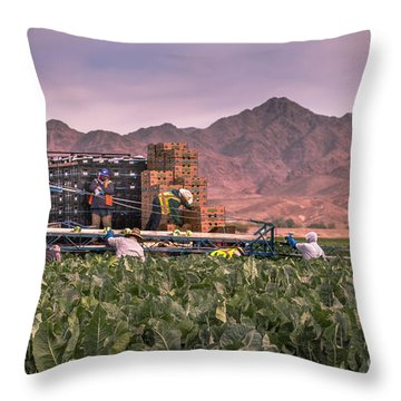 Cauliflower Harvest Throw Pillow by Robert Bales
